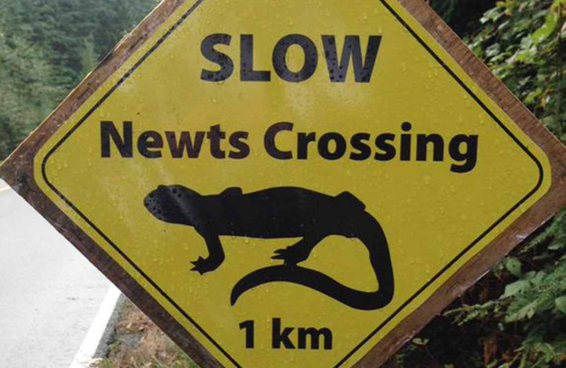 newts-crossing-lge.jpg